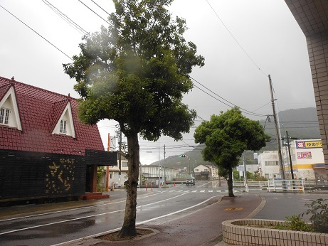 梅雨のヤマモモ_e0175370_23292925.jpg