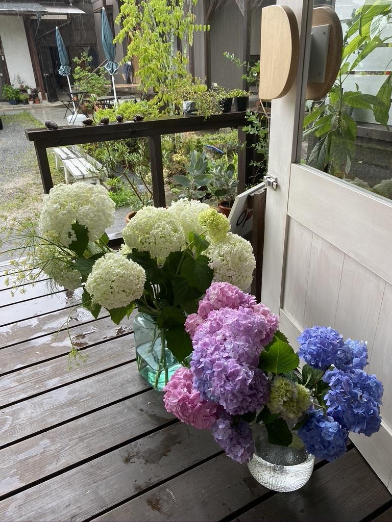 紫陽花の季節 〜雨の日は〜_c0334574_14053862.jpeg