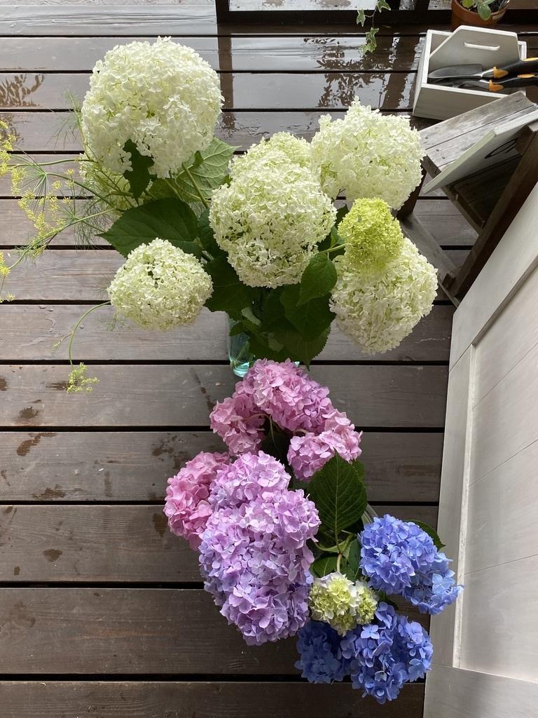 紫陽花の季節 〜雨の日は〜_c0334574_14055788.jpeg