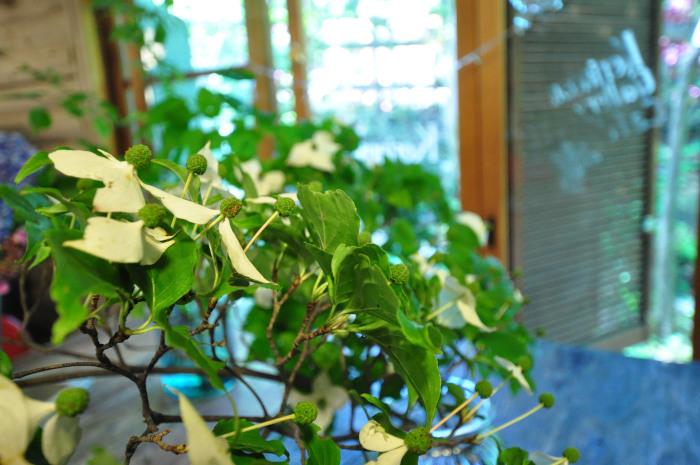 We\'re in Tsuyu rainy season_f0188408_14304240.jpg