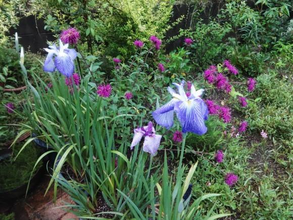 6月の花壇_e0352610_09535008.jpg