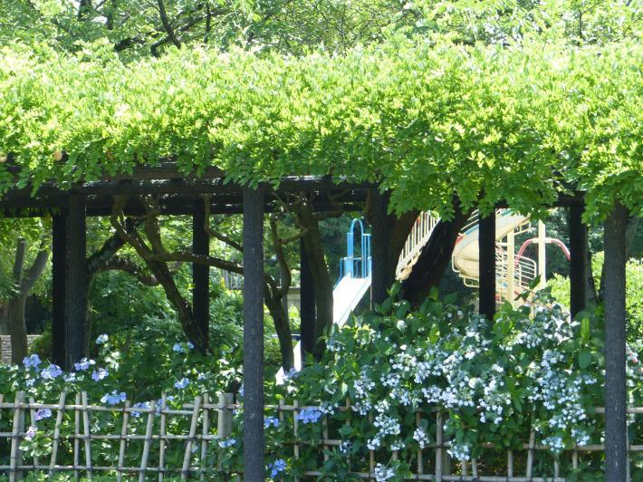 玉敷神社の紫陽花_f0296312_18331307.jpg