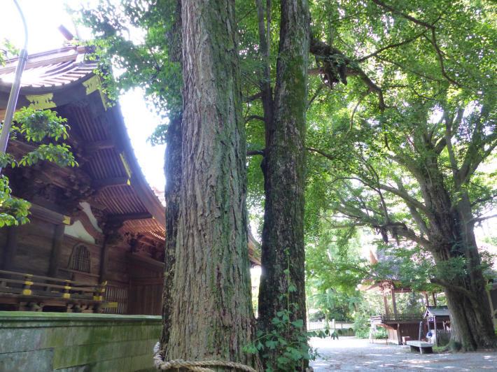 玉敷神社の紫陽花_f0296312_18411255.jpg
