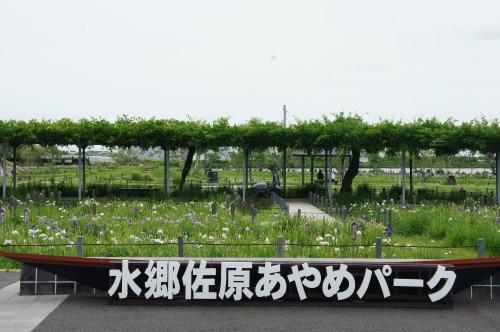 【水郷佐原 あやめパークに行ってきました】_f0215714_15085607.jpg