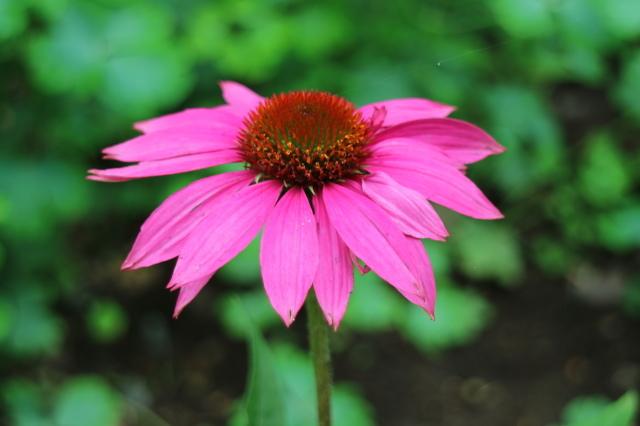 夏の花が咲いて来ました~♪_e0397815_00164211.jpg