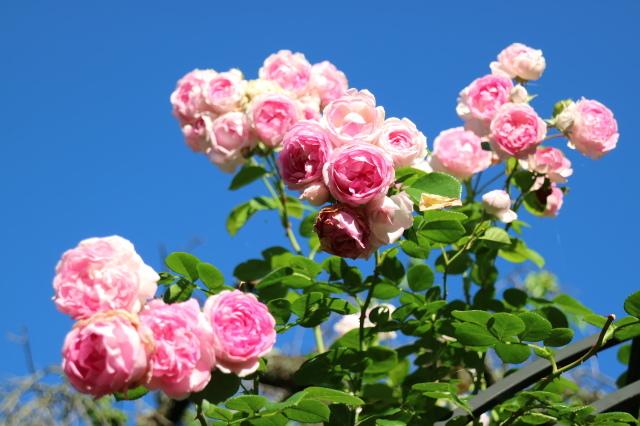 夏の花が咲いて来ました~♪_e0397815_00175835.jpg