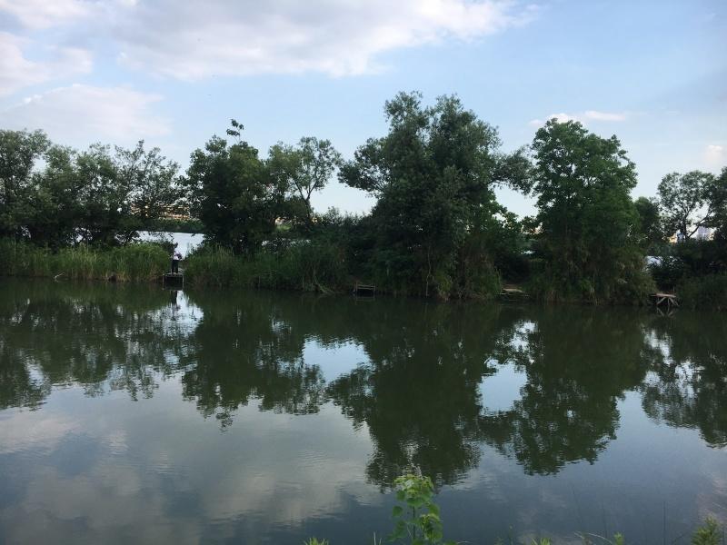 淀川に可愛い動物_a0114816_10010975.jpg