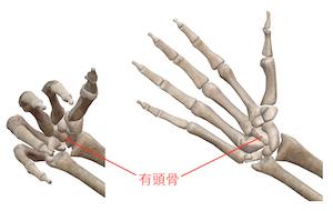 手首 痛い 🤝腕立て伏せ 腕立てで手首が痛くなるのはなぜ?原因や対策を知って胸を鍛えよう