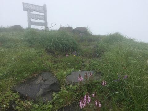 霧雨の西別岳_e0405754_16585581.jpg