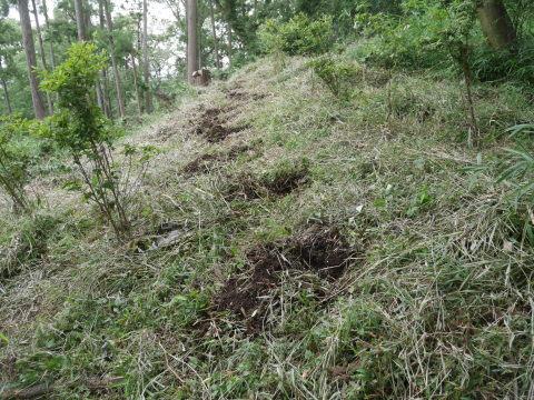 植樹したヤマザクラ、オオシマザクラに品種表示6・18_c0014967_09035636.jpg