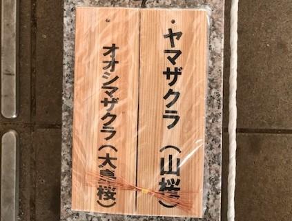 植樹したヤマザクラ、オオシマザクラに品種表示6・18_c0014967_09050941.jpg