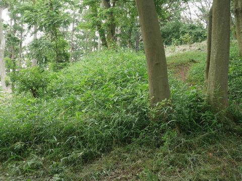 植樹したヤマザクラ、オオシマザクラに品種表示6・18_c0014967_09075428.jpg