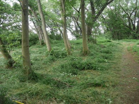植樹したヤマザクラ、オオシマザクラに品種表示6・18_c0014967_09083494.jpg