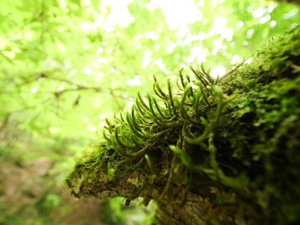 東京 苔の森_a0351368_22201284.jpg