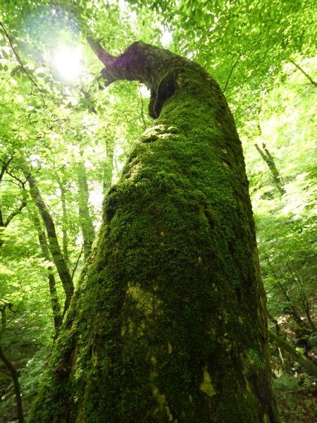 東京 苔の森_a0351368_22280436.jpg