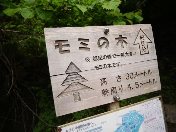 東京 楽しい森歩き_a0351368_22511782.jpg