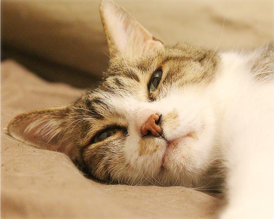 子猫の教育_a0389088_16581951.jpg
