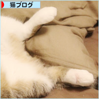 子猫の教育_a0389088_16581965.jpg