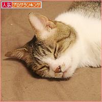 子猫の教育_a0389088_16581982.jpg