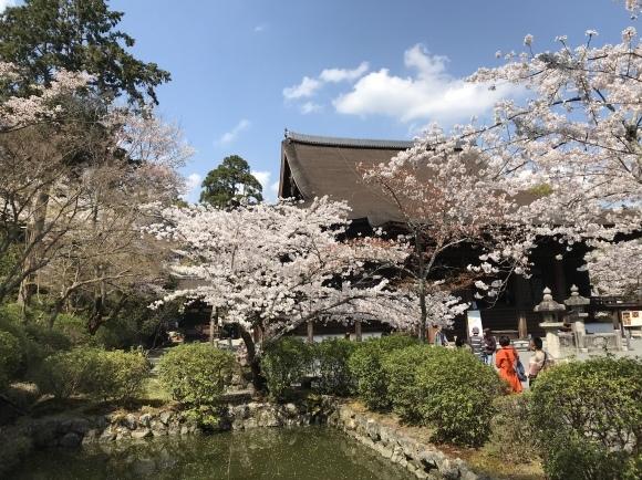 三井寺の桜と石碑 2020_f0010195_18141064.jpeg