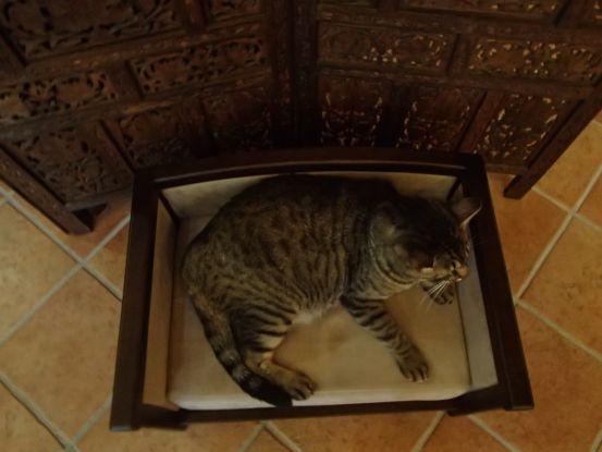 素晴らしいアンティーク調の犬猫用ベッド_f0064906_13561092.jpg