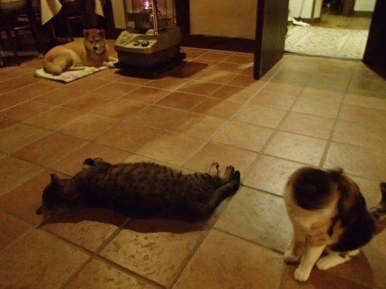 素晴らしいアンティーク調の犬猫用ベッド_f0064906_13563426.jpg