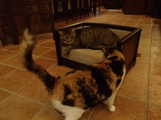 素晴らしいアンティーク調の犬猫用ベッド_f0064906_13564127.jpg