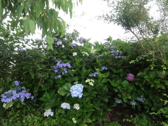 6月の花壇_e0352610_08045036.jpg