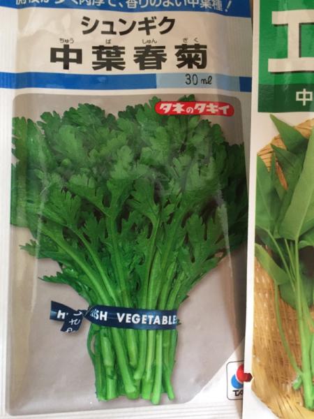 春菊と空芯菜、蒔いてみました_f0101128_09444416.jpg