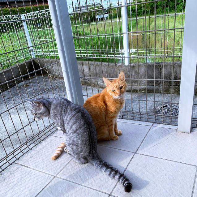 雨上がりの猫テラス_d0355333_22460008.jpg