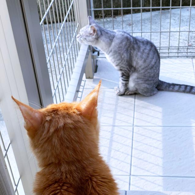 雨上がりの猫テラス_d0355333_22460894.jpg