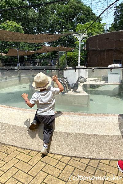 1年ぶりの井の頭動物園さんぽ_c0024345_18460931.jpg