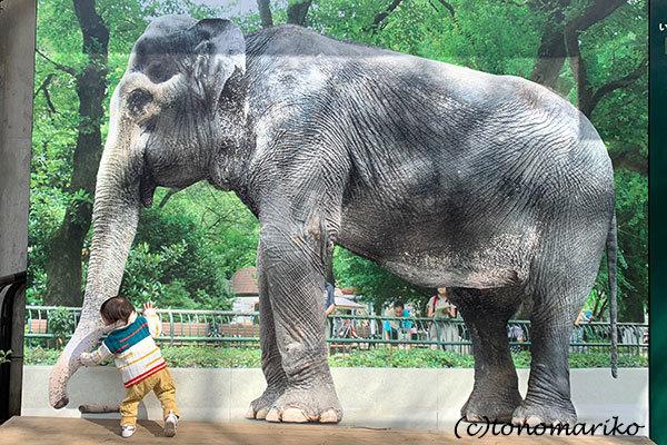 1年ぶりの井の頭動物園さんぽ_c0024345_18460960.jpg