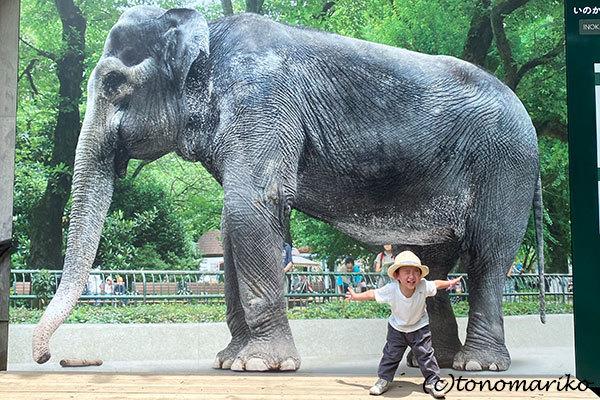 1年ぶりの井の頭動物園さんぽ_c0024345_18461079.jpg