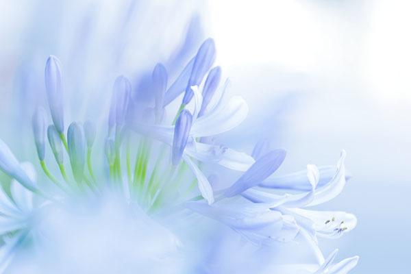 隣の芝生ならぬ花は綺麗_e0022047_23293732.jpg