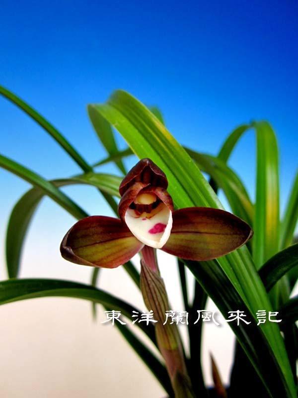 紫織             No.568_f0178953_23133971.jpg