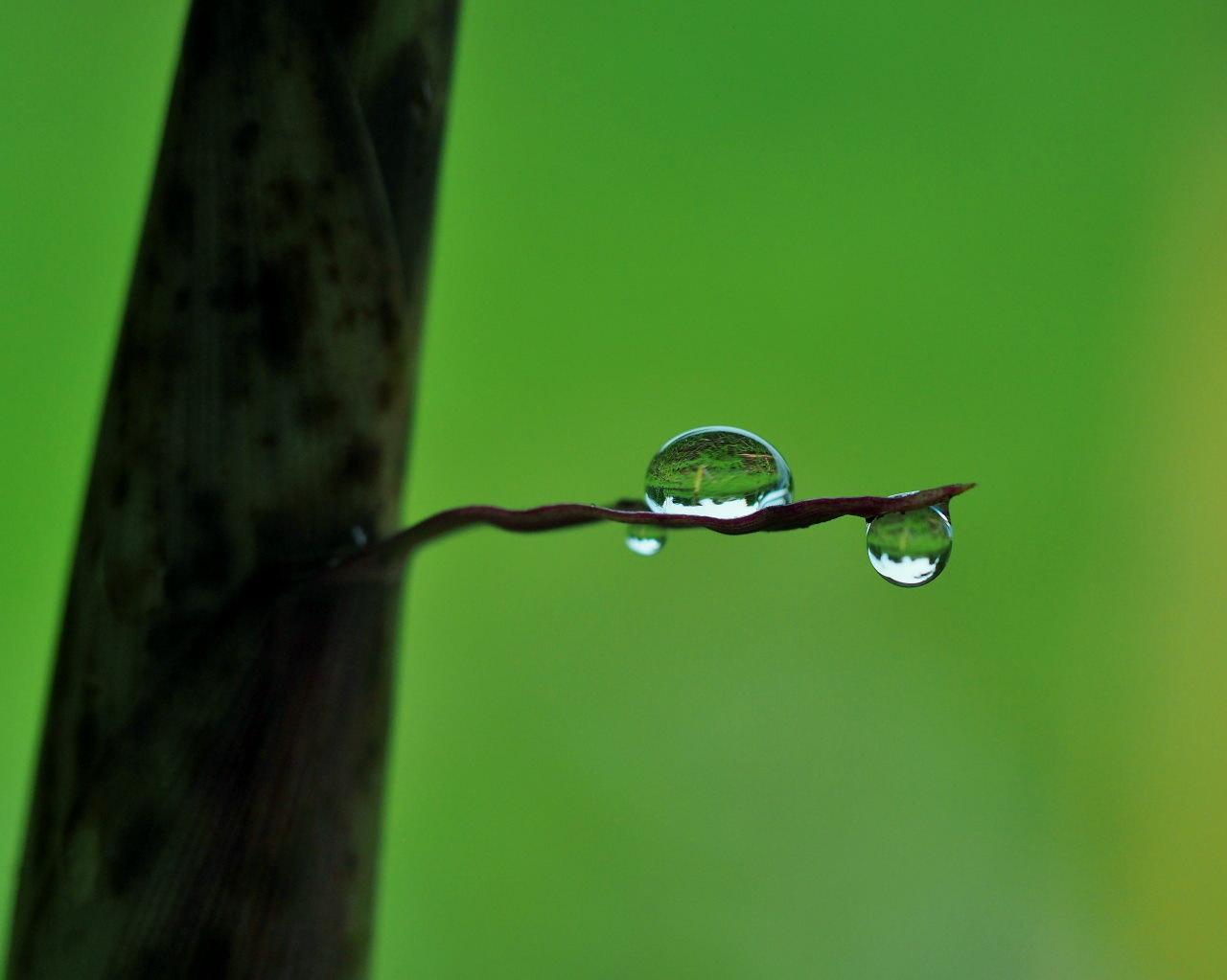 梅雨さなか アジサイなど色々と_c0305565_17283694.jpg