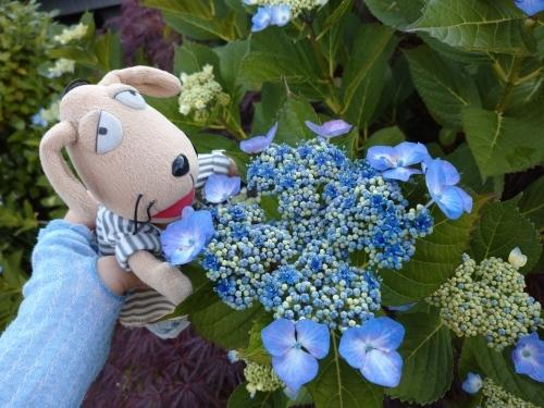 初夏の花々_c0158573_06405150.jpg