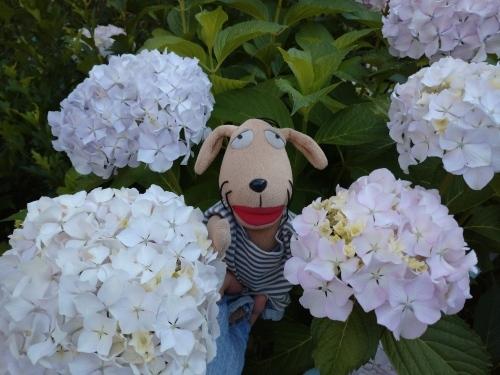 初夏の花々_c0158573_06411034.jpg