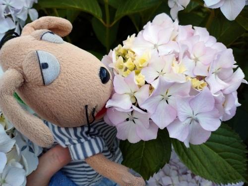 初夏の花々_c0158573_06412730.jpg