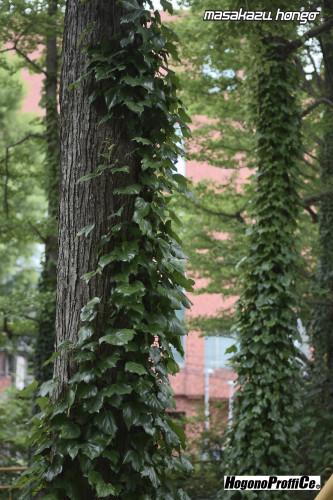 【おっ散歩カメラ放浪記:第10回】錦町公園と小西六フィルム_b0008475_08054264.jpg