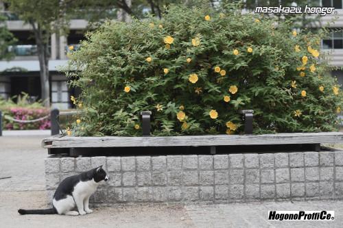 【おっ散歩カメラ放浪記:第10回】錦町公園と小西六フィルム_b0008475_08055356.jpg