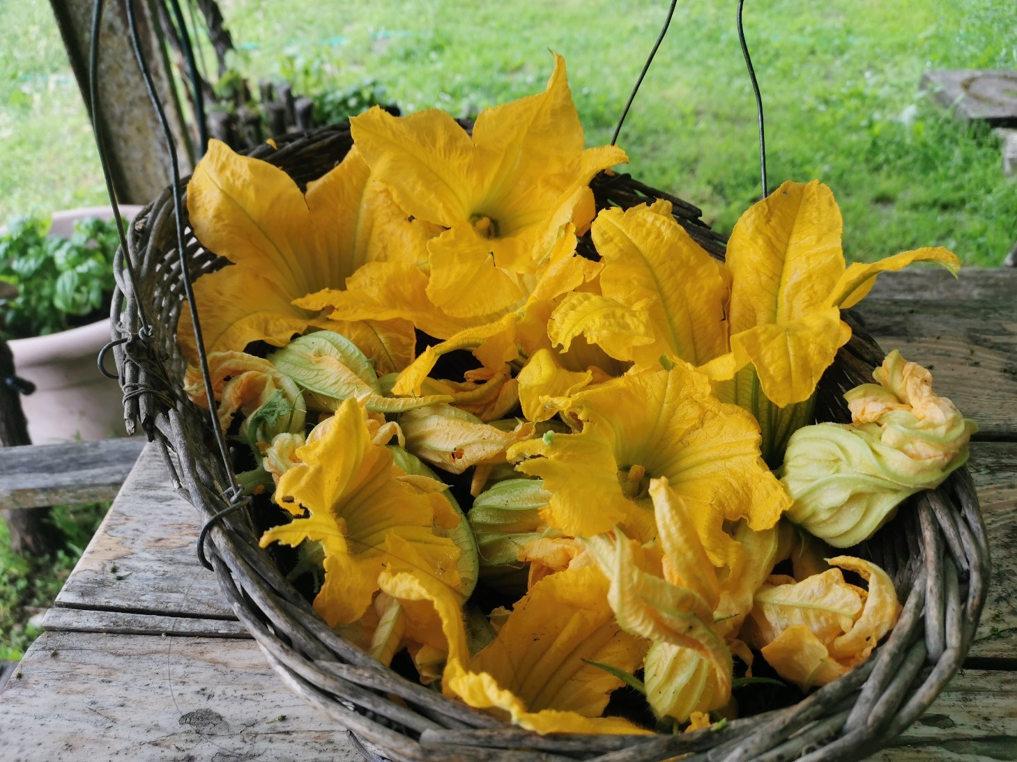 今のイタリアの旬の食べ物は・・・ズッキーニの花のフライ_f0106597_01054771.jpg