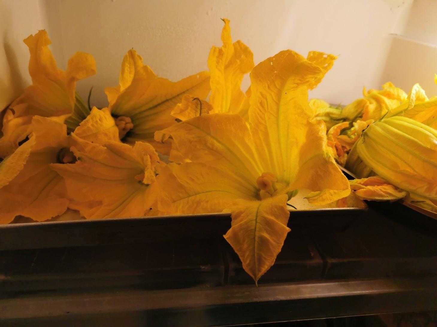 今のイタリアの旬の食べ物は・・・ズッキーニの花のフライ_f0106597_01060197.jpg
