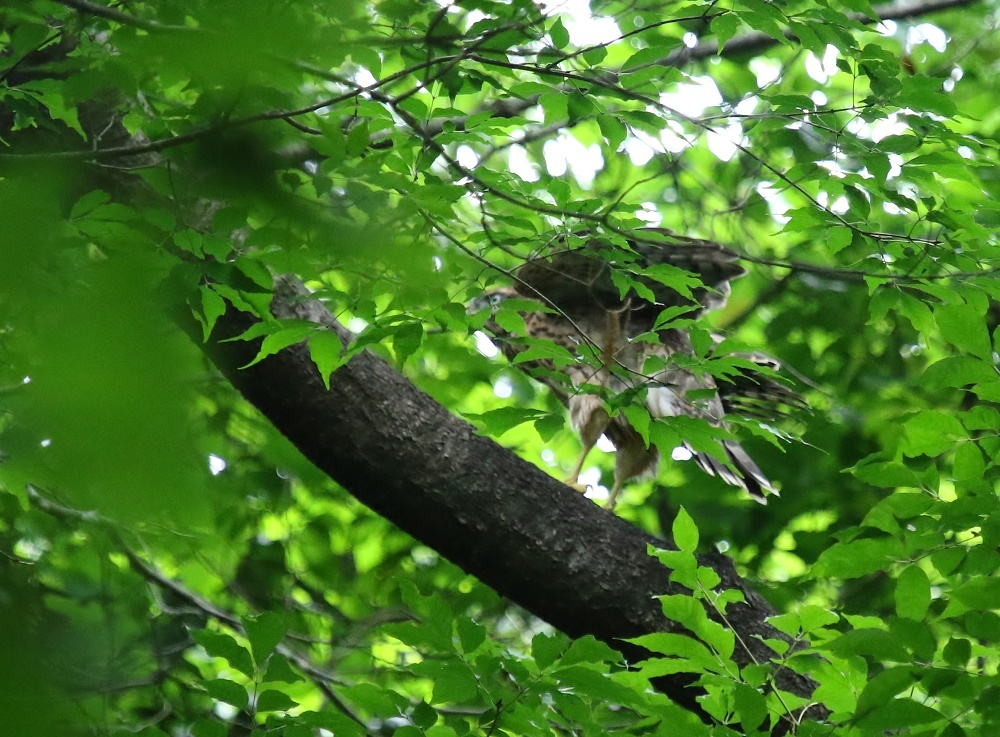 近隣探鳥、_f0305401_10370078.jpg