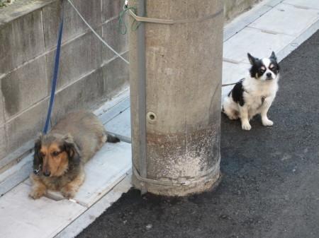 人と犬_b0203907_11301592.jpg