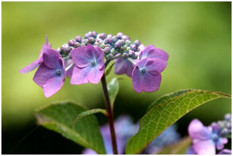 花の寺_b0037717_10200187.jpg