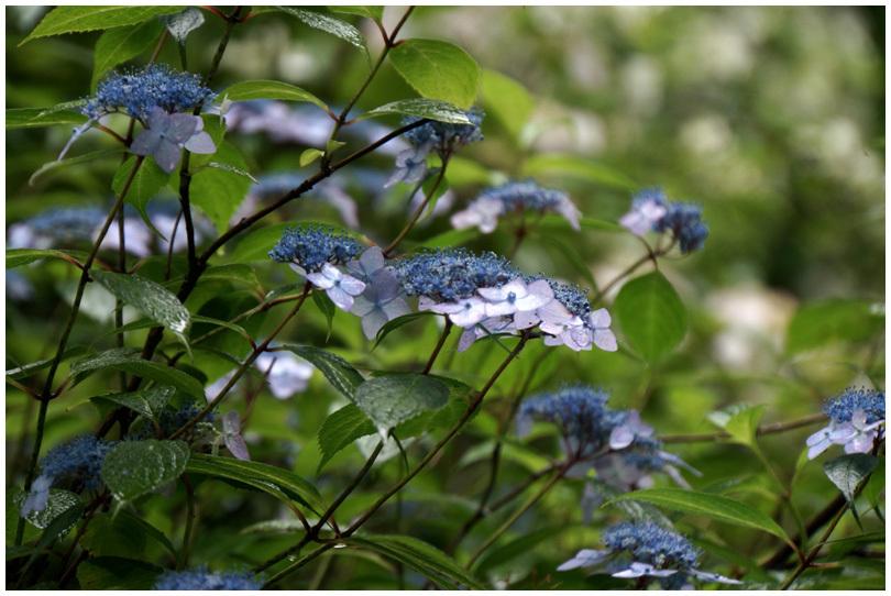 花の寺_b0037717_10201836.jpg