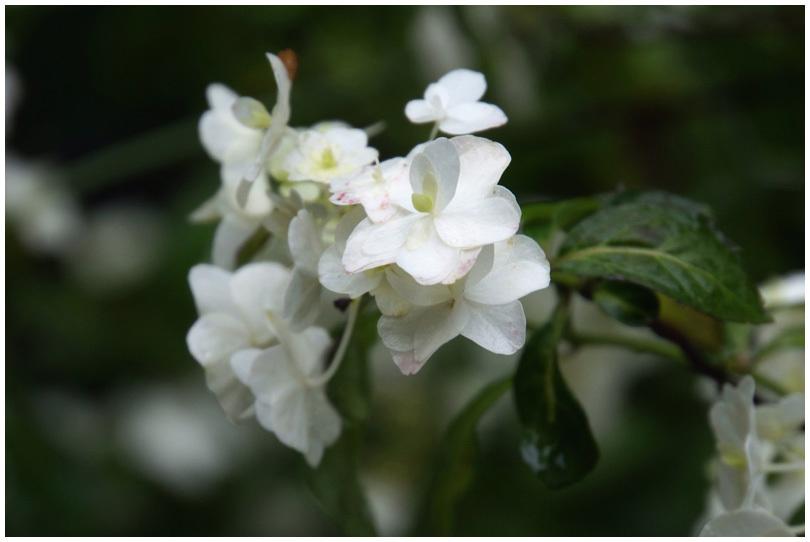花の寺_b0037717_10203086.jpg