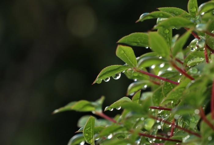 早朝散歩の楽しみ 一日中 雨が降った日の 翌朝_d0150720_05325765.jpg